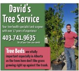 Your tree health specialist and surgeon