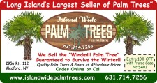 Island Wide Parlm Trees is