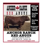 ANCHOR RANCH RED ANGUS  BULLS FOR SALE